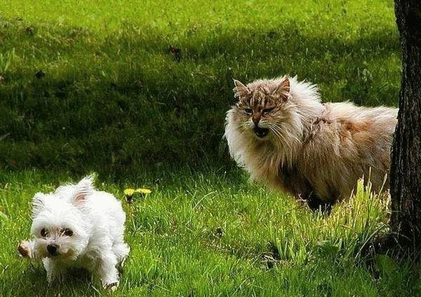 Cat Funny Pictures I am a tigger