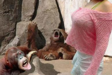 Animal Funny Pictures Man Natural Reaction