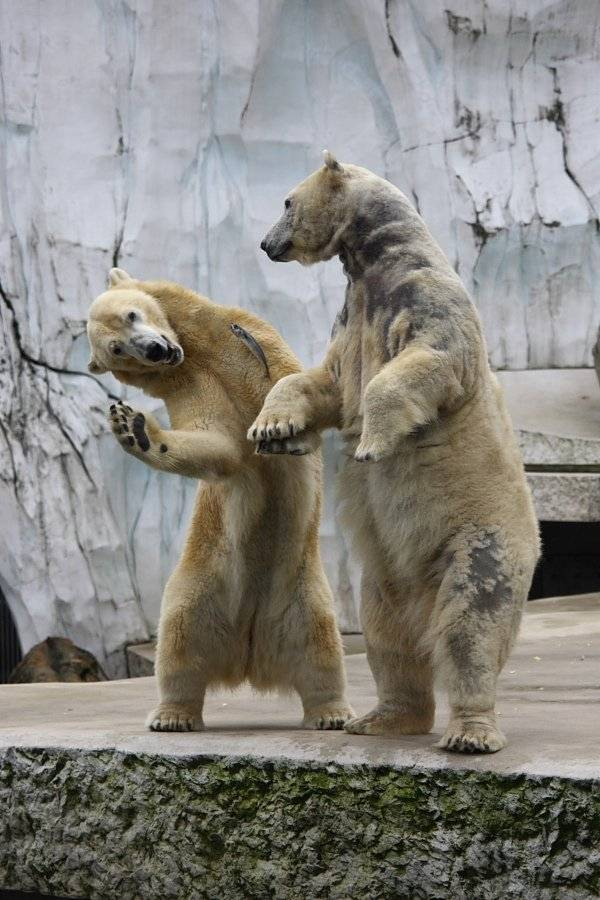 Animal Funny Pictures are you dancing?