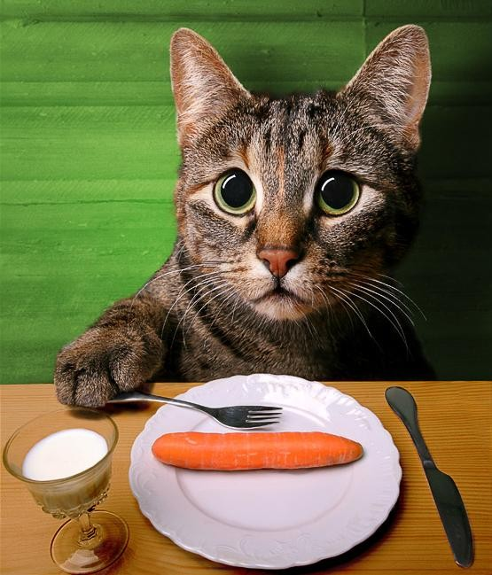 Cat Funny Pictures Cats diet.