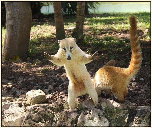 http://www.visualjokes.com/pics/700_animal2.jpg