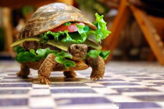 Animal Funny Pictures Hotturtle. New from Macdonald