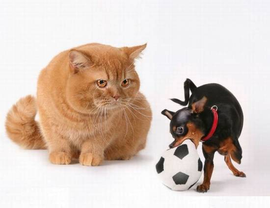 Animal Funny Pictures Best friends