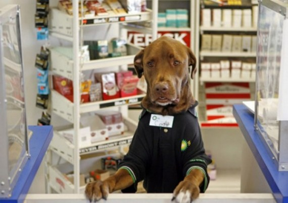 Animal Funny Pictures Drugstore...