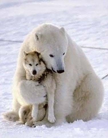 Animal Funny Pictures Love is ....