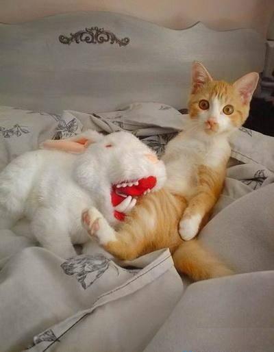 Cat Funny Pictures animals: habbit and cat