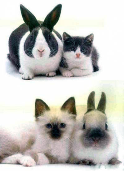 Cat Funny Pictures Can you found different between ...