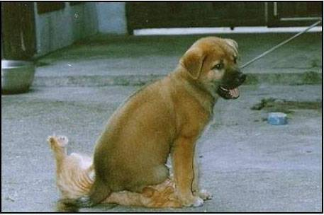 Animal Funny Pictures Friends