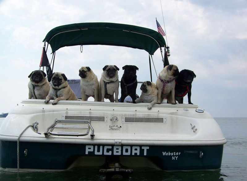 Dog Funny Pictures  The most accurately named boat I have ever seen