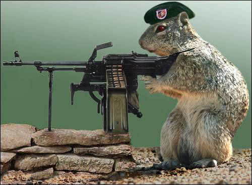 Funny Pics Armrodent