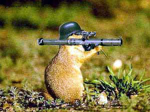 Animal Funny Pictures The military beaver
