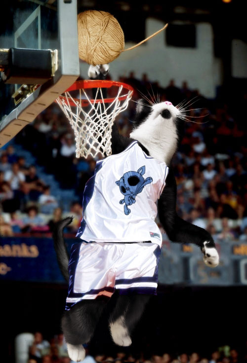 Cat Funny Pictures CatsBasketBall