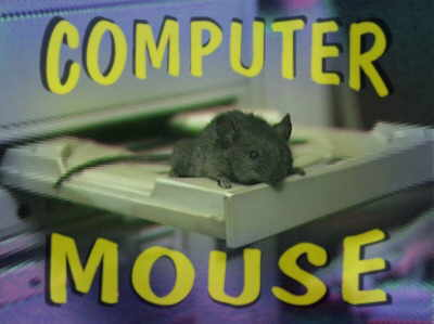 Animal Funny Pictures Real computer mouse
