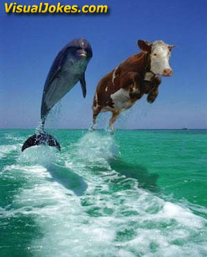 Animal Funny Pictures The cows dream