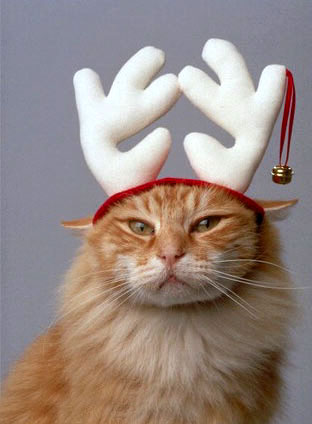 Cat Funny Pictures Santa Claus deer