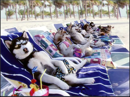 Dog Funny Pictures Dog vacation