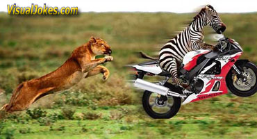 Animal Funny Pictures Evolution