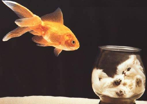 Animal Funny Pictures Fish dream