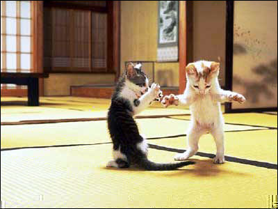 Cat Funny Pictures Karate