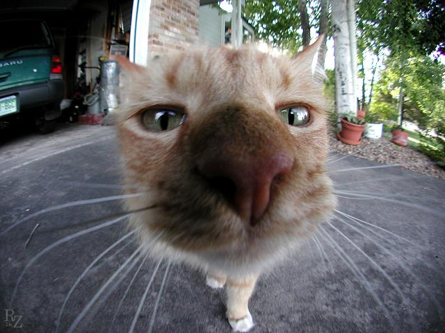 Cat Funny Pictures Cool cat !!!