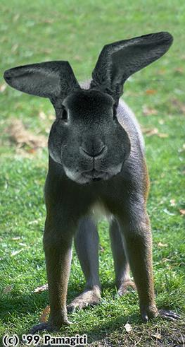 Animal Funny Pictures Rabbit-mutant