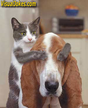 Animal Funny Pictures Surprise!