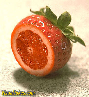 Clean Funny Pictures The great fruit
