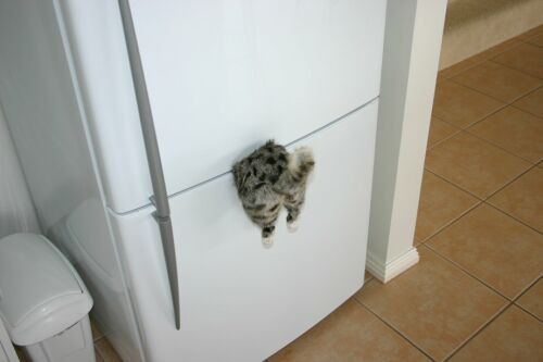 Cat Funny Pictures Where is our cat?